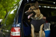 K9 outfitted with vest by MA Vest-a-Dog