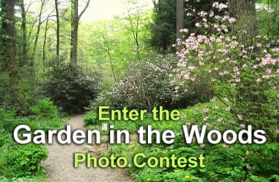 PHOTO CONTEST - Garden in the Woods, Framingham, MA