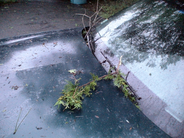 Photo - Bits of leaves, pine needles and small small branches torn from trees by Hurrican Irene's winds cover this car's hood in Framingham. (August 28, 2011)