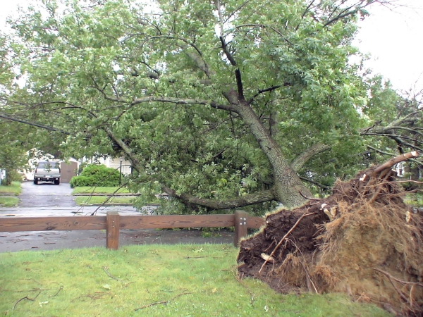Photo - At the other end of Grant St, a tree which was uprooted in Butterworth Park pulls down more wires and forces the Framingham DPW to detour traffic until NStar crews can repair the damage. (August 28, 2011)
