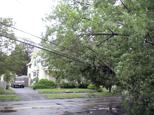 Photo - Close-up of downed wires near Butterworth Park in Framingham. (August 28, 2011)