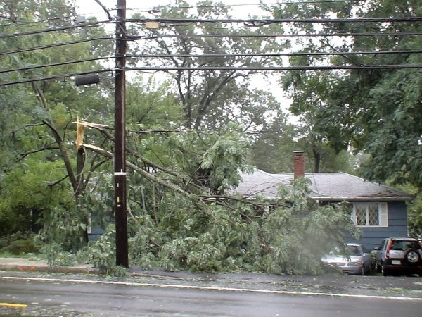 On August 28, 2011, Hurricane Irene splintered this tree at Dan Liberatore's house, 140 Water St., Framingham, MA