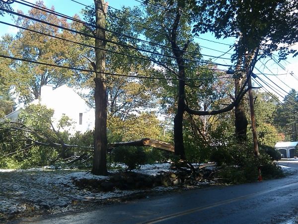 Large tree falls on corner of Belknap Rd. and Edgell Rd. during October 29th snow storm.