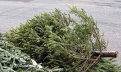 Framingham DPW to pick up Christmas Trees weeks of January 23rd-27th, 2012.